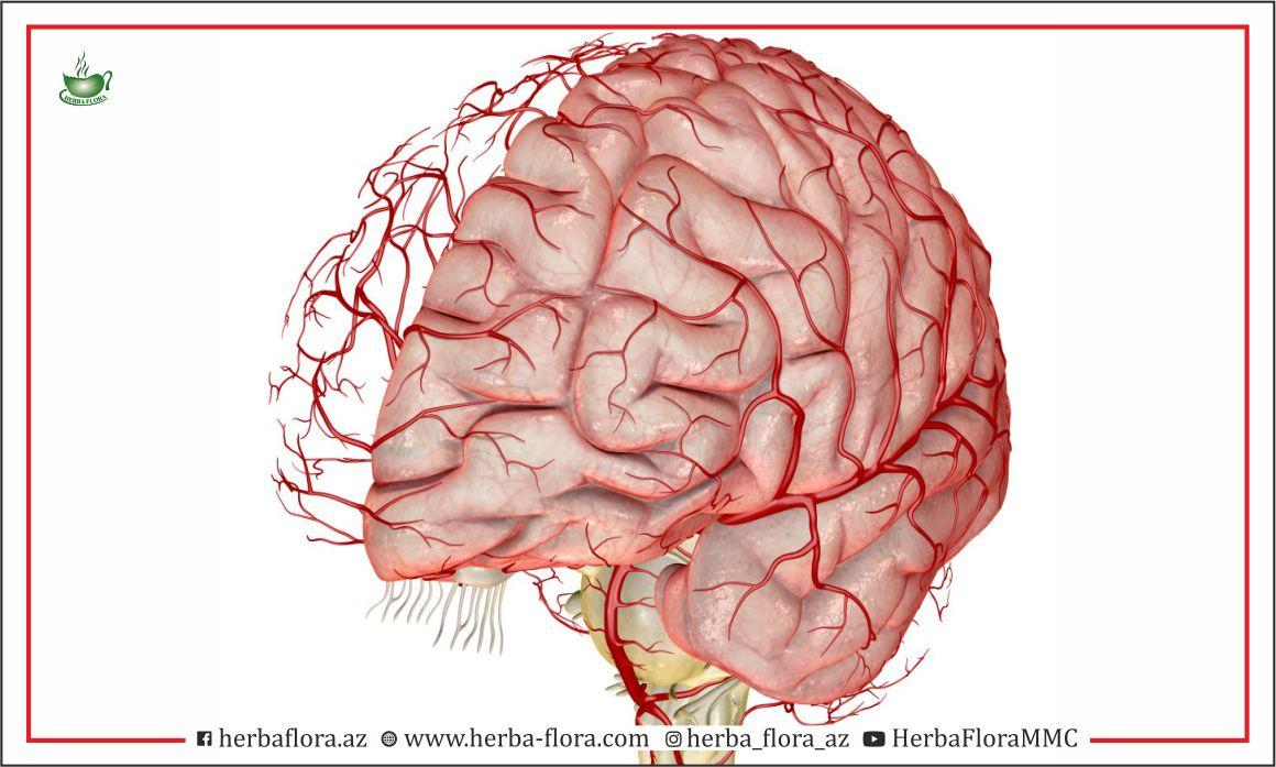 Beyin qan dövranının pozulması.
